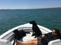 April '17 ... cruising with the pups